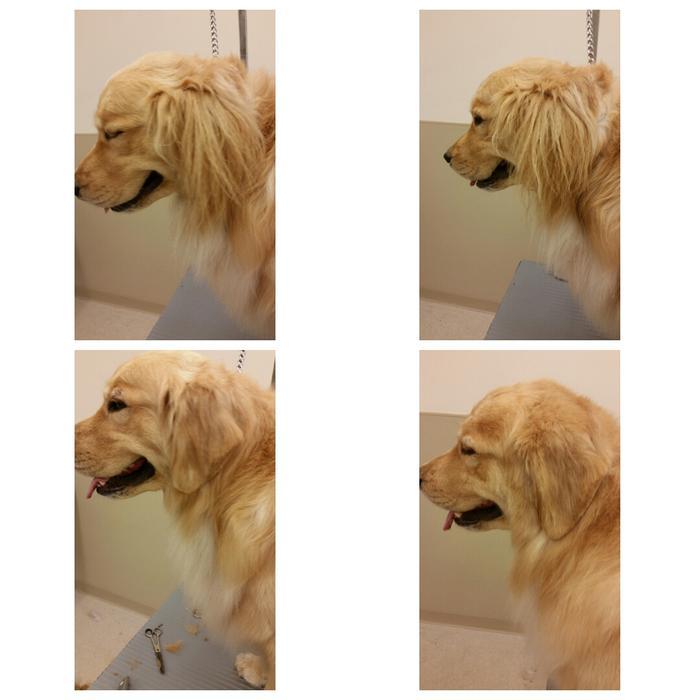 Kamloops Dog Groomer