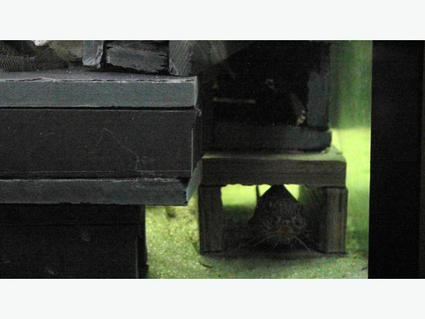 Aquarium pond fish stone breeding hiding caves saanich for Koi pond hiding places