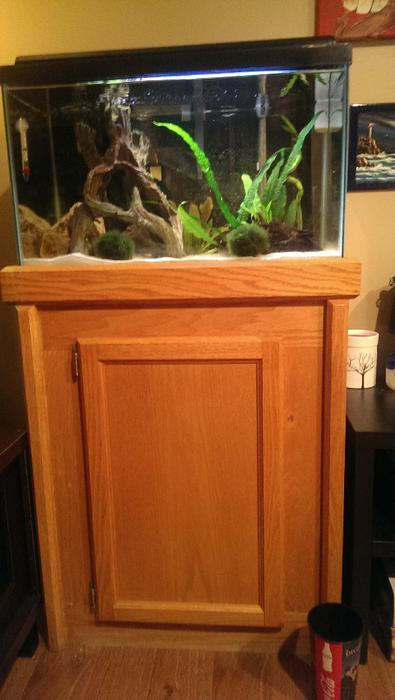 20 gallon fish tank beautiful custom stand north regina