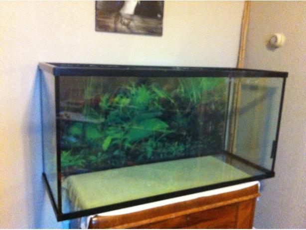 80 Gallon Aquarium Sooke Victoria
