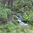 Serene Suite Victoria BC -Ocean/Forest- Hot tub too!