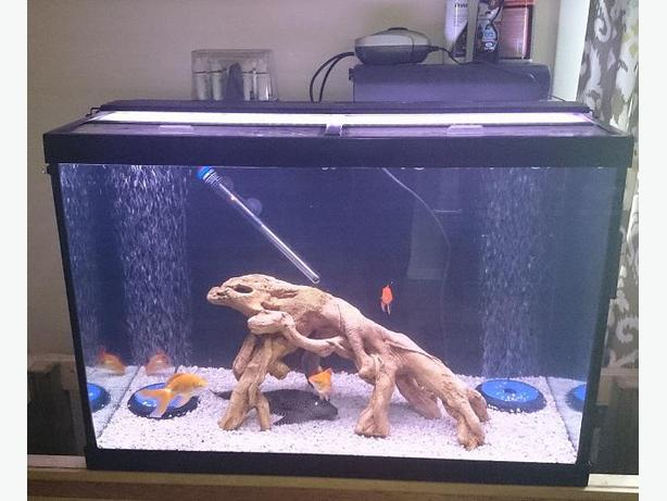 60 Gallon Complete Set Up And Fish Yes 100 West