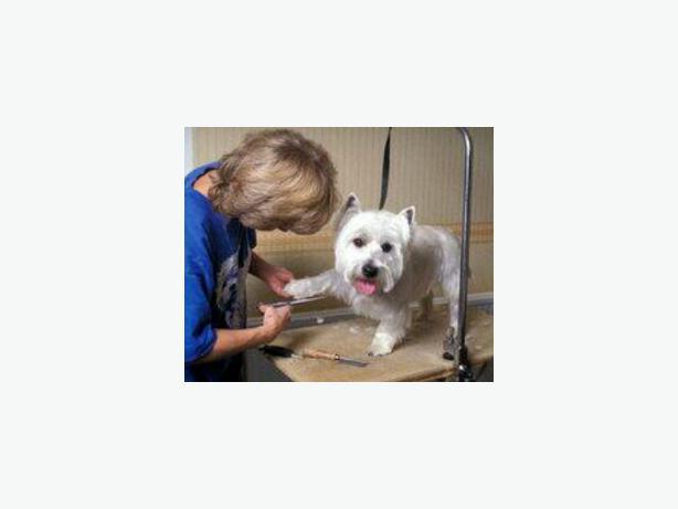 Dog Groomer Property For Rent