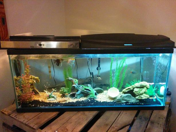 50g fish tank with everything you need outside nanaimo for What do i need for a fish tank