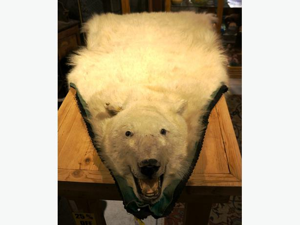 25 Off Vintage Taxidermy Polar Bear Full Head 6ft Rug