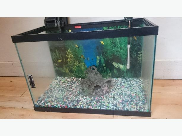 20 gallon tank crofton cowichan for 20 gallon fish tank dimensions