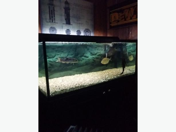 90 gal tank and stand west shore langford colwood for 90 gallon fish tank stand