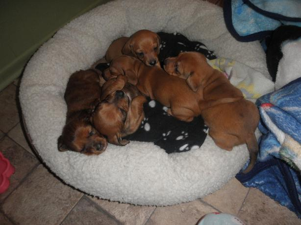 Used Regina Dogs For Sale