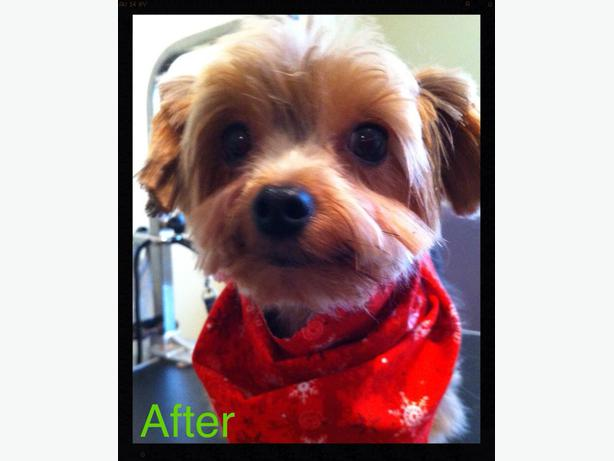 In Your Home Dog Grooming Oshawa On
