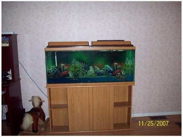 55 gallon fish tank with stand sault ste marie sault ste for 55 gallon fish tank and stand