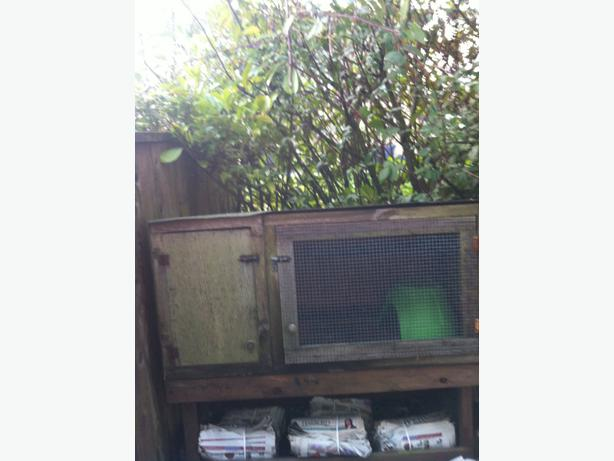 Free rabbit or guinea pig hutch north saanich sidney for Free guinea pig hutch