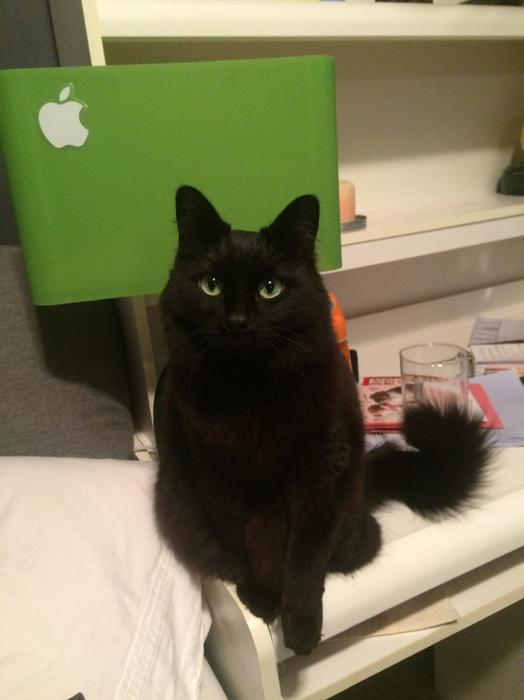 Black Cat Sault Ste Marie