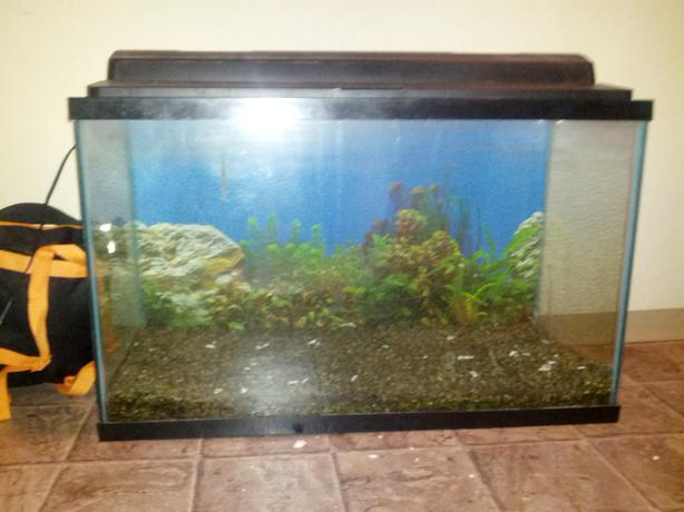 30 Gallon Fish Tank Setup And Stand Esquimalt View Royal