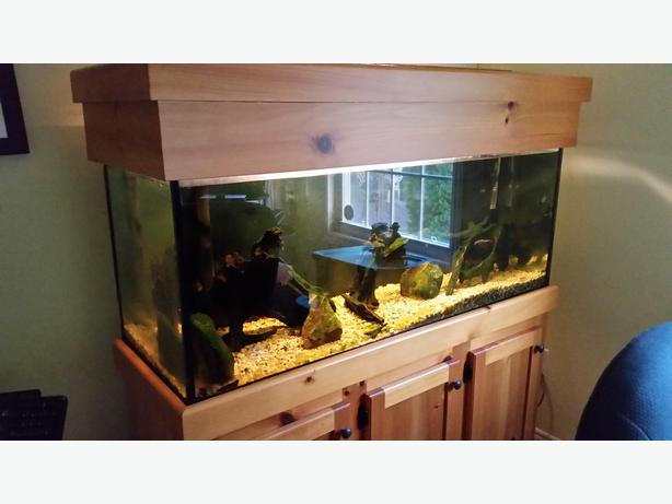 Fresh water aquarium and fish prince county pei for 70 gallon fish tank