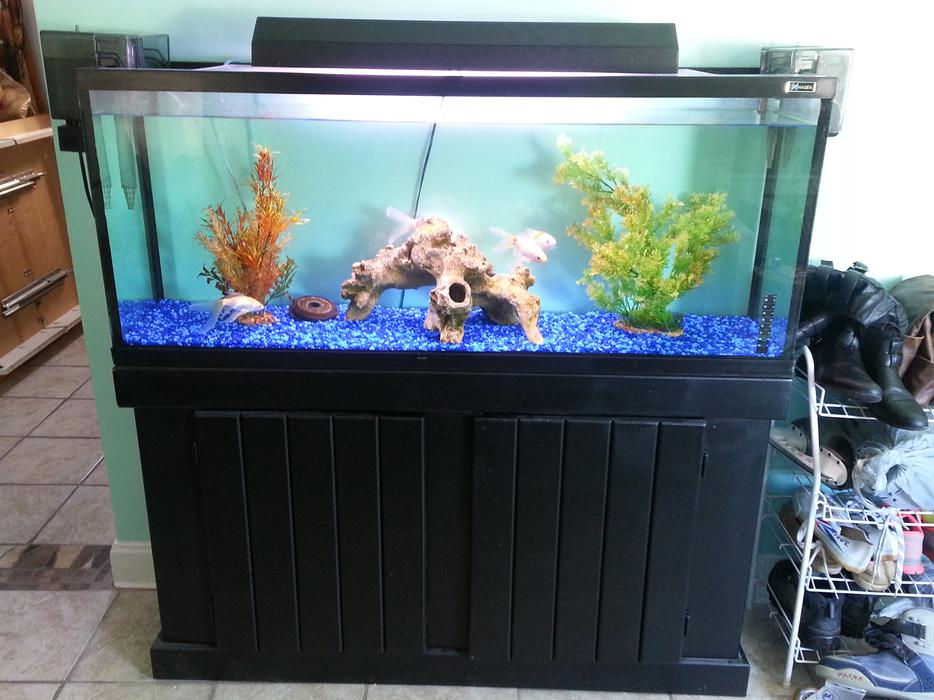 Goldfish aquarium tank filters pumps light rock 50 gallon for 50 gallon fish tank filter