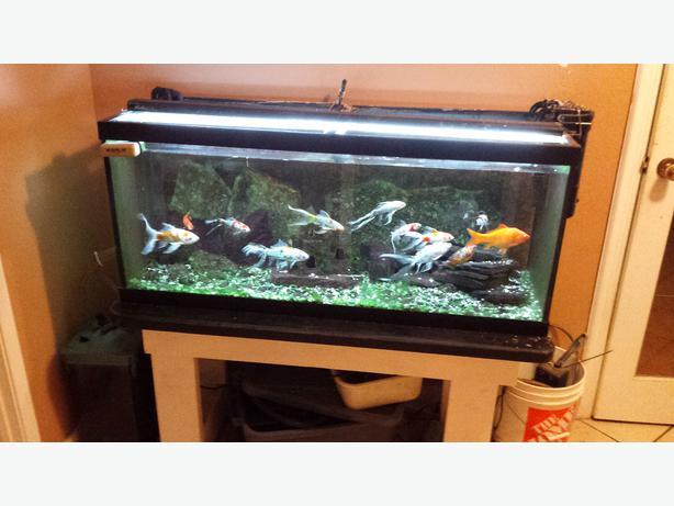 Fish tanks for sale victoria city victoria for Used 300 gallon fish tank for sale