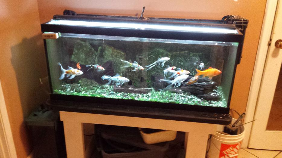 Fish tanks for sale victoria city victoria for Amazon fish tanks for sale