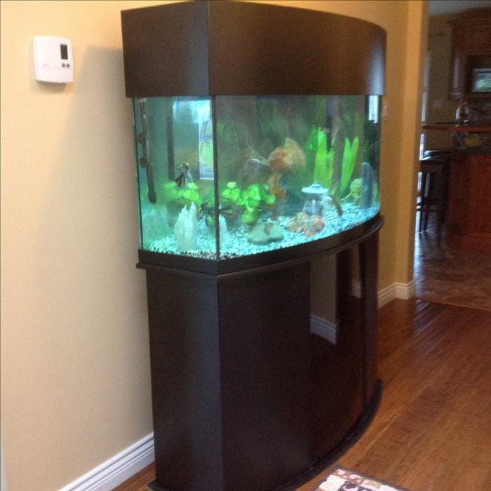 72 gallon oceanic bow front aquarium courtenay campbell for Bow front fish tank