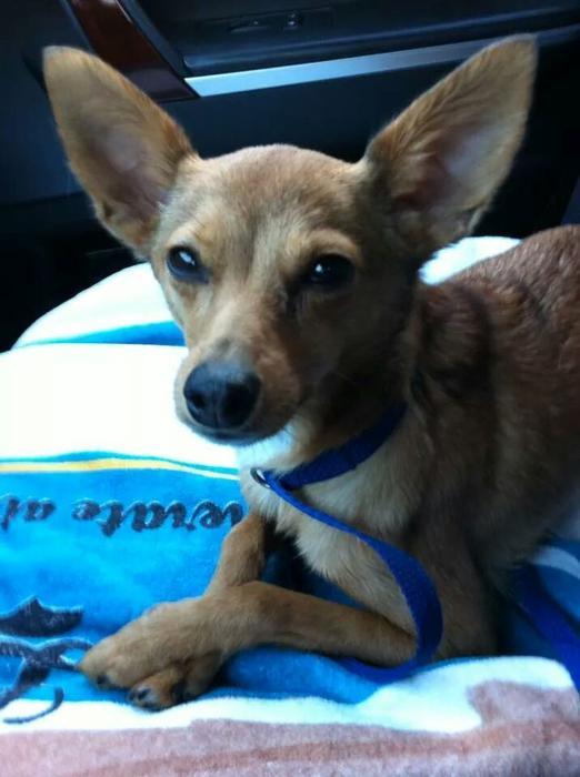 Dog Rescue Adoption Okanagan