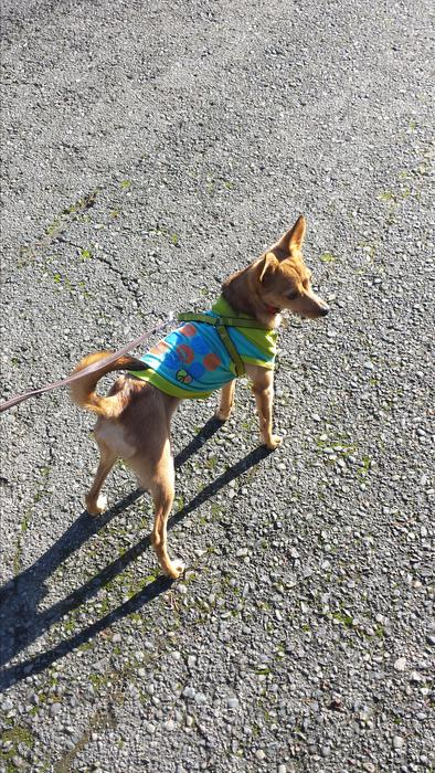 Cowichan Valley Rescue Dogs