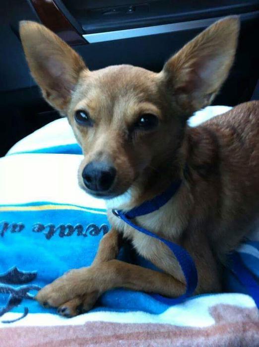 Dogs For Adoption In St John S