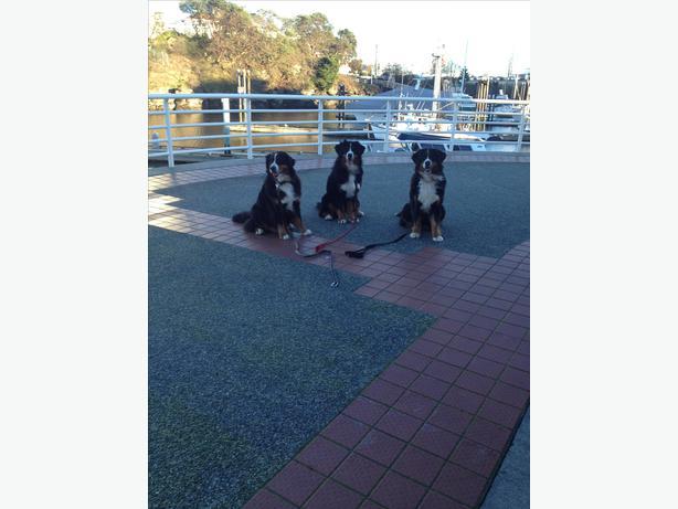 Dog Agility Training Nanaimo