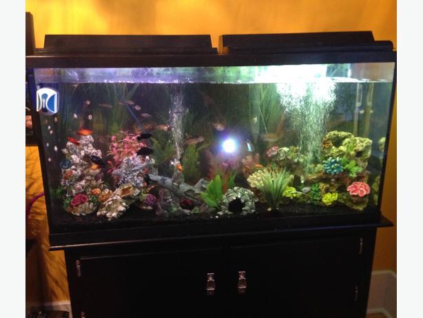 60 gallon fish tank central regina regina for 90 gallon fish tank dimensions