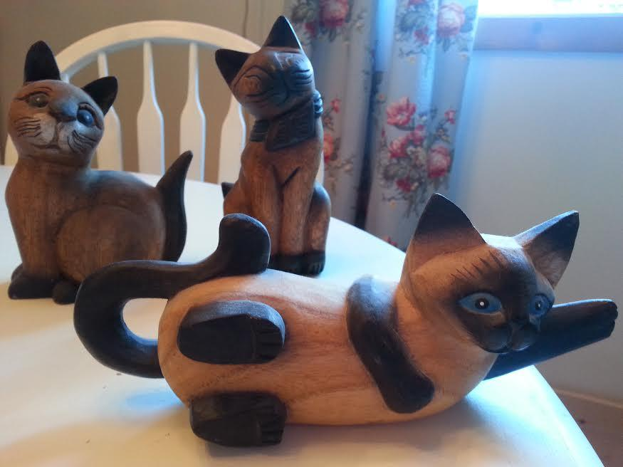 Cats Abbotsford