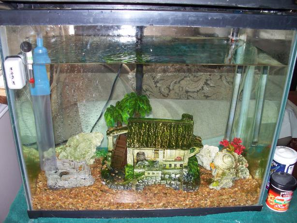Complete 30 gallon fish tank west shore langford colwood for 70 gallon fish tank
