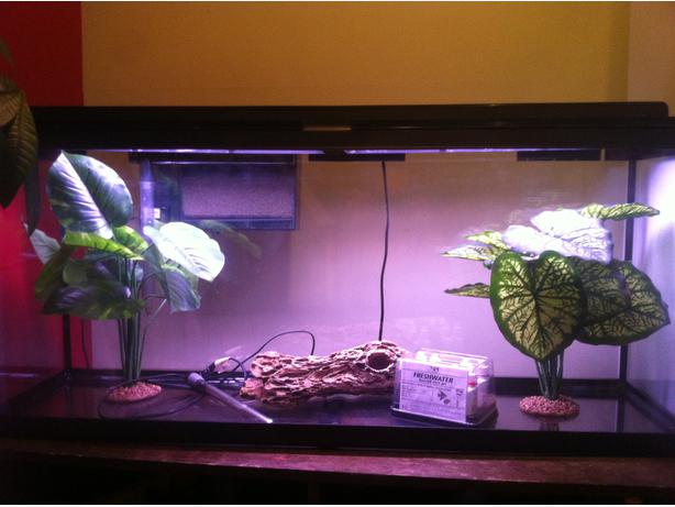 Fluval 55gal long aquarium for sale victoria city victoria for Used 300 gallon fish tank for sale