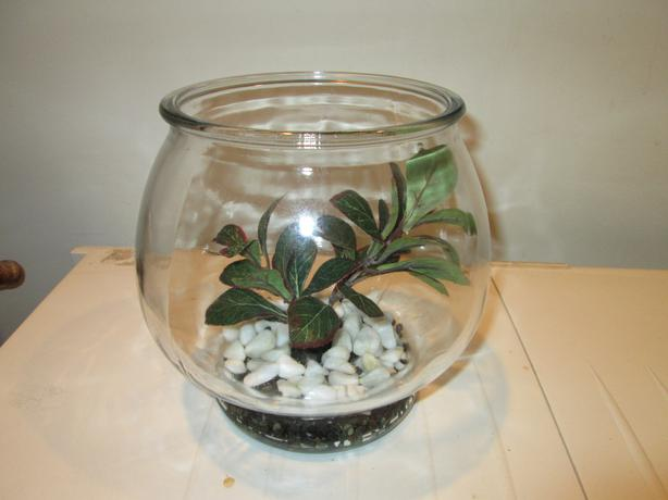 1 5 gallon glass beta fish bowl saanich victoria for 2 gallon fish bowl