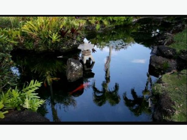 Palm tree and pond plants and fish west shore langford for Pond fish wanted