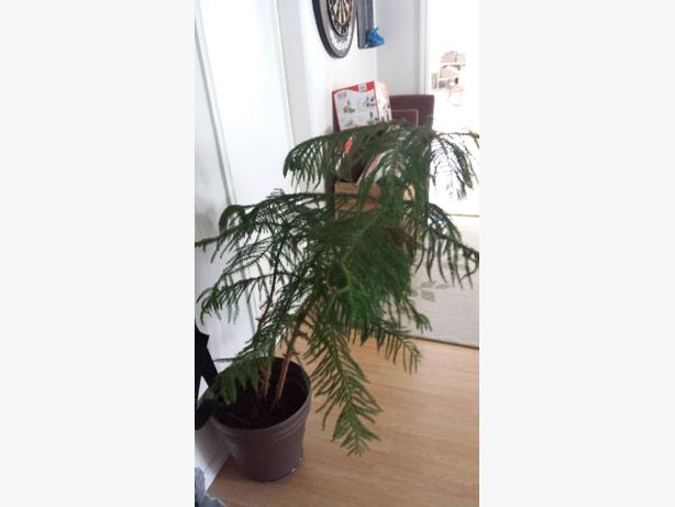 Beautiful Plants For Sale Beautiful House Plants in