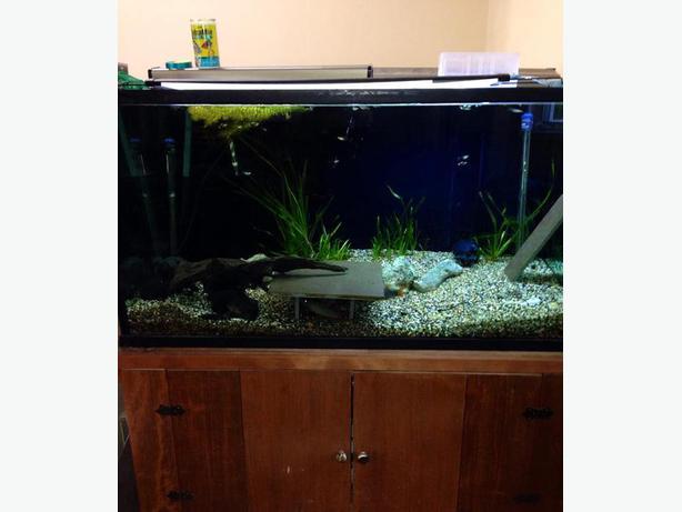 125 gal aquarium fish tank custom stand west shore for 125 gallon fish tank