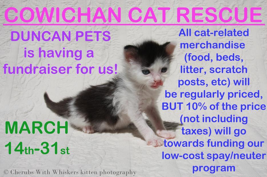 Cat Rescue Brockville Ontario