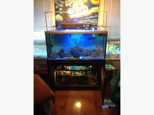 70 gallon salt tank reduced esquimalt view royal victoria for Used 300 gallon fish tank for sale