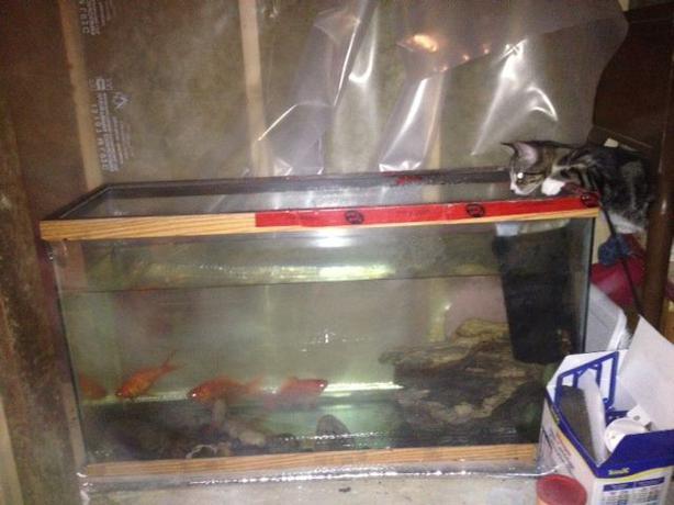 35 gallon aquarium with 4 large fish downtown winnipeg for 35 gallon fish tank