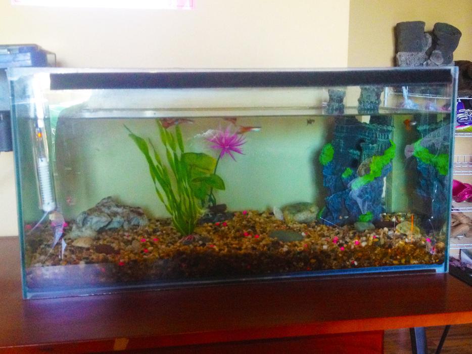 15 gallon aquarium fish tank and supplies south regina regina for 15 gallon fish tank
