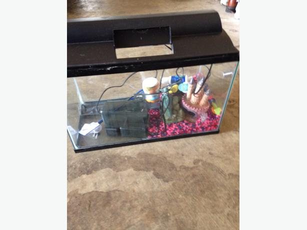 Small fish tank with supplies outside nanaimo parksville for What do you need for a fish tank