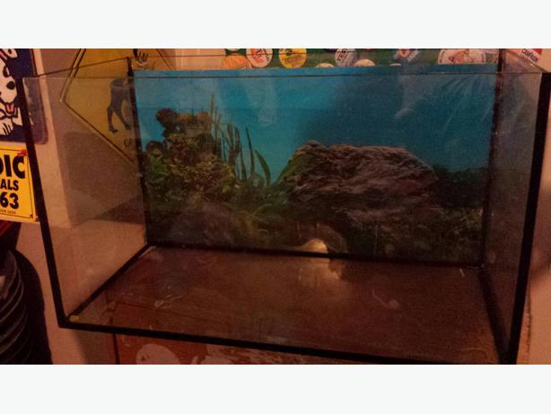 20 gallon fish tank east regina regina for 20 gallon fish tank for sale