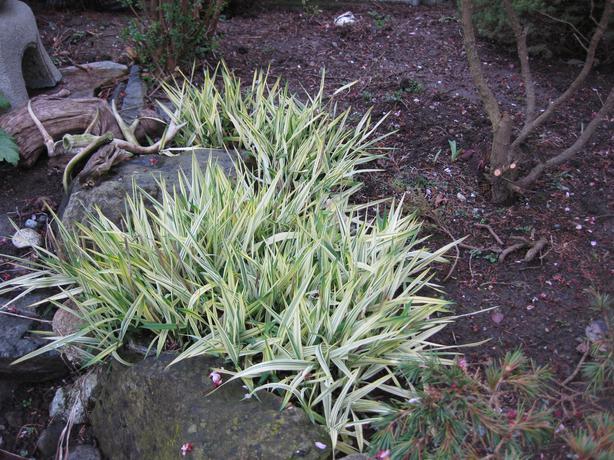 Ornamental Grasses Victoria Bc : Ornamental grass saanich victoria