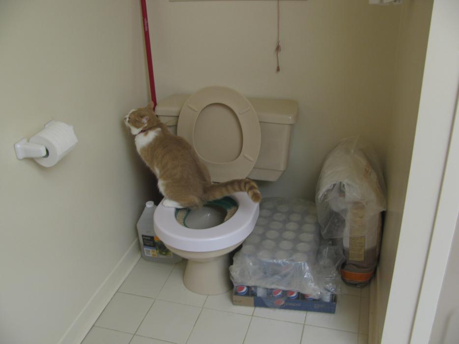 Multi Cat Litter Kwitter
