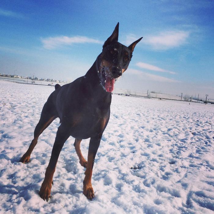 Dog Walker Mississauga