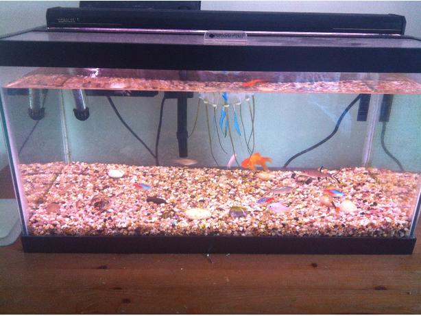 20g fish tank victoria city victoria for Fish tank with filter and heater