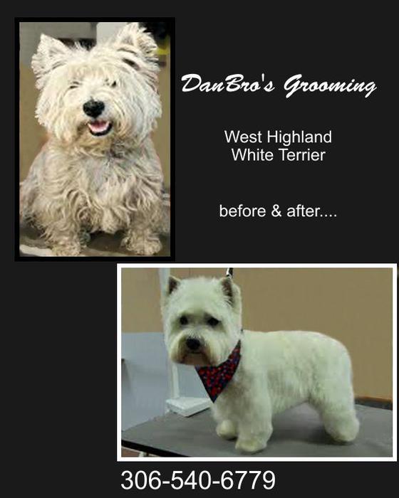 Dog Grooming Regina