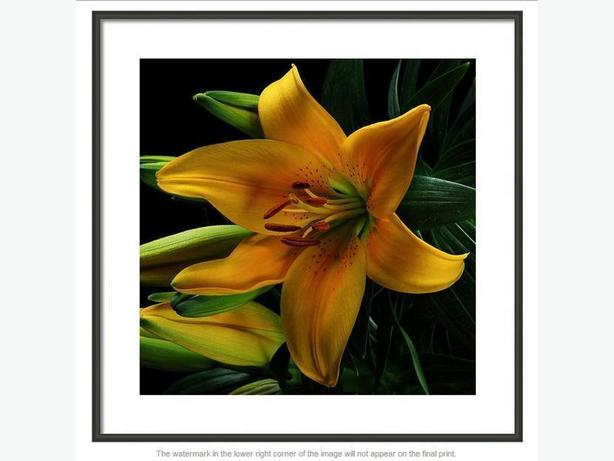 FINE ART  PRINTS FROM $27