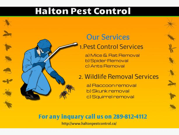 Looking For Affordable & Reliable Pest Control Services. Hair Schools In Columbia Sc Qb Point Of Sale. How Much Is Hair Restoration. How Long Do You Have To Wait To Refinance. Marketing Program Manager B2b Email Addresses. Fashion And Design Colleges In New York. How To Print To A Wireless Printer. Web Based It Ticketing System. Online Business Profile 2013 Fiat Convertible