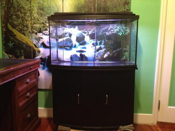 Fish tank saanich victoria for 40 gallon fish tank stand