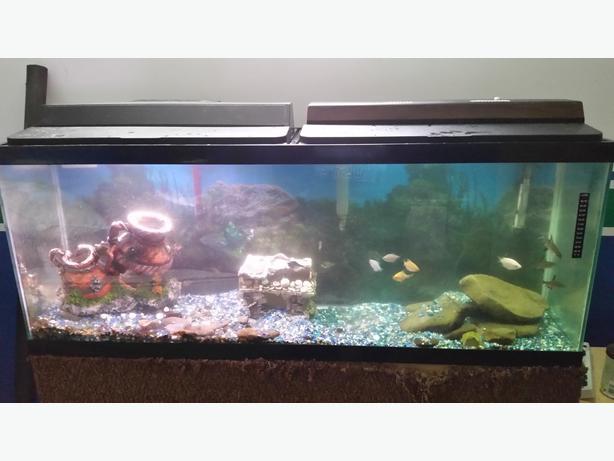 50 gallon aquarium port alberni alberni for 50 gallon fish tank filter