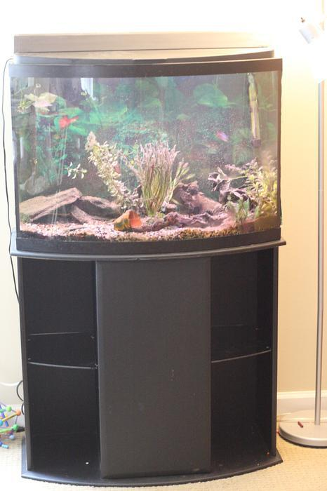 38 gallon bow front fish tank and stand with accessories for Bow front fish tank